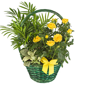 Plant arrangement Golden Garden