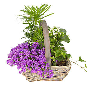 Plant arrangement Summer Basket