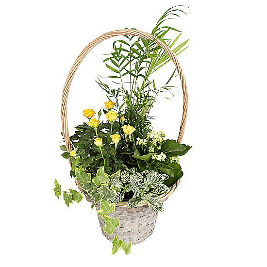 Planted Sunshine Basket