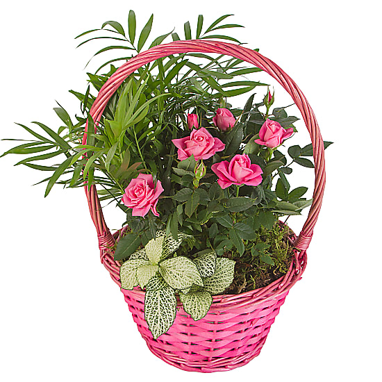 A Planted Gift Basket