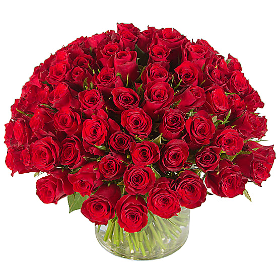 100 Red Roses
