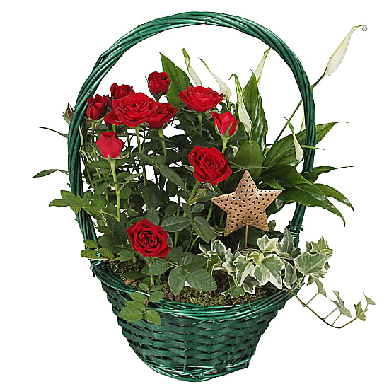 Red Xmas Star Basket
