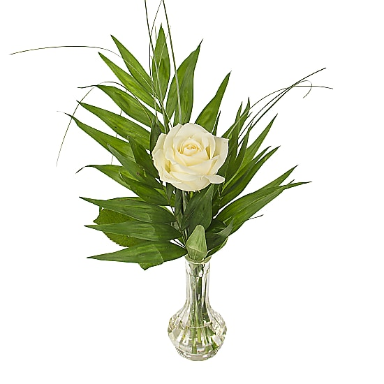 A White Rose In A Vase Delivered Next Day