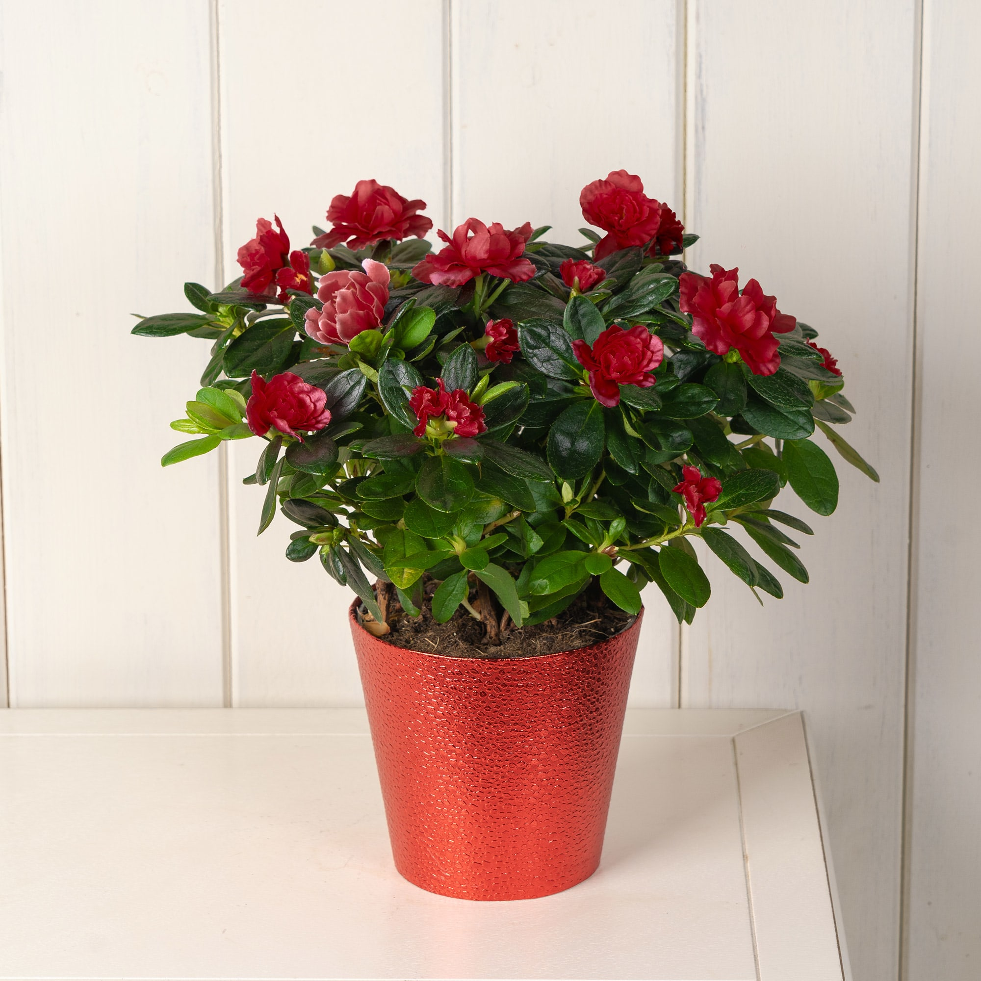 Red Azalea Christmas Basket