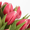 30 Pink Tulips with Vase