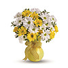 Classic Yellow and White Daisies