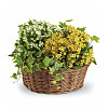 12`` Planter Basket