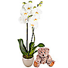 New Baby Orchid Gift Set