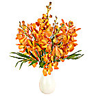 Orange Mokara Orchids