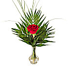 A Red Rose in a Vase