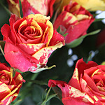 Fairtrade Fireflash Bouquet