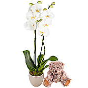 Baby Boy Orchid Gift Set