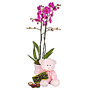 Baby Girl Orchid Gift Set