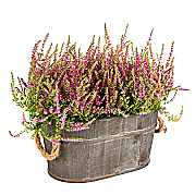 Heather Planter