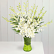 Flower bouquet White Dendrobium