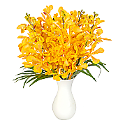 Yellow Mokara Orchids