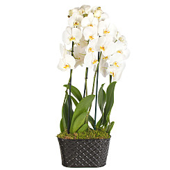 Plant arrangement White Orchid Planter