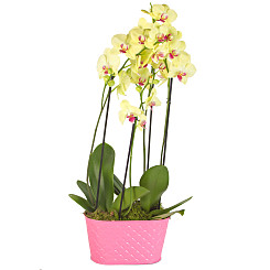 Plant arrangement Yellow Orchid Planter