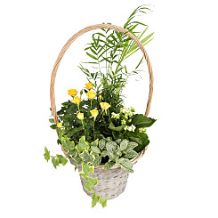 Plant arrangement Sunshine Basket