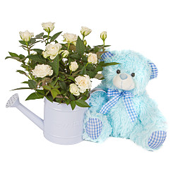 Plant arrangement Baby Boy Rose Gift with Teddy