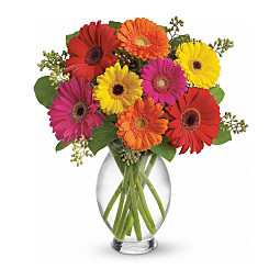 Flower bouquet Gerber Brights