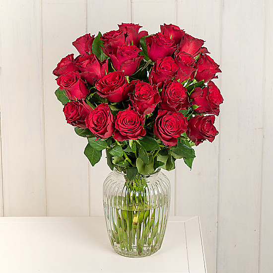 Serenata Flowers Two Dozen Red Roses Picture
