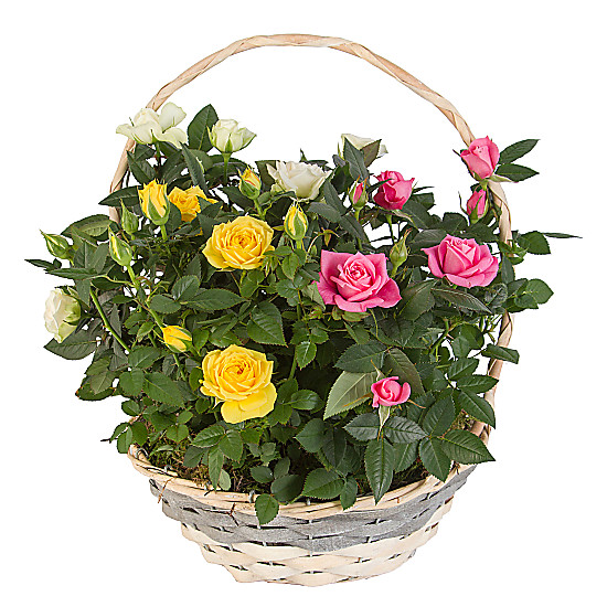 Serenata Flowers Mixed Rose Basket Picture
