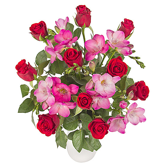 Serenata Flowers Hot Blush Picture