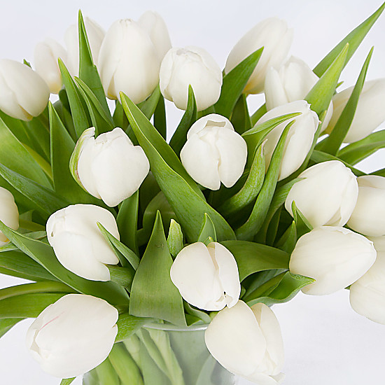 30 White Tulips with Vase delivered next day