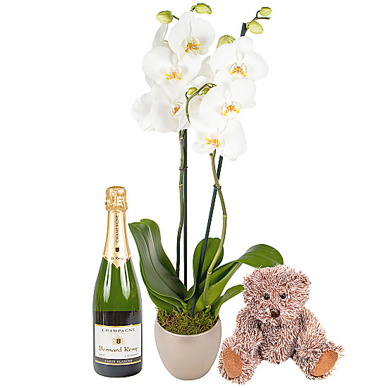 Serenata Flowers New Baby Orchid Gift Set with Champagne Picture