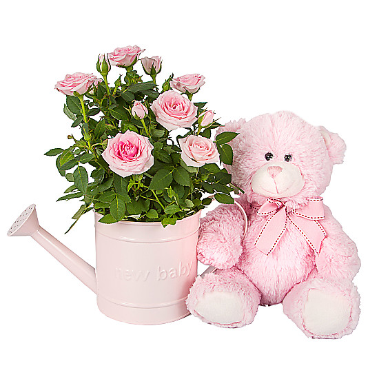 Serenata Flowers Baby Girl Rose Gift with Teddy Picture
