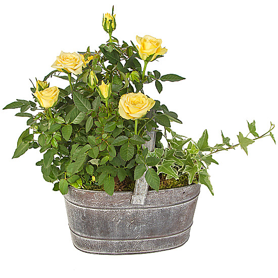 Serenata Flowers Yellow Rose Trug Picture
