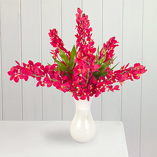 Serenata Flowers Red Mokara Orchids Picture