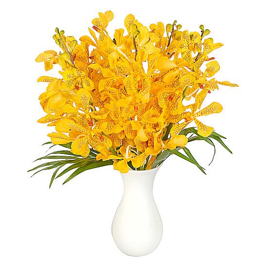 Yellow Mokara Orchids