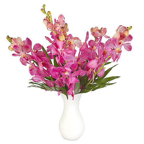 Serenata Flowers Pink Mokara Orchids Picture