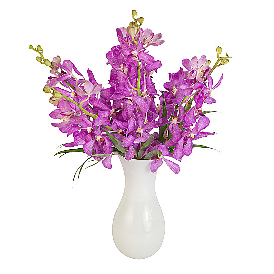 Serenata Flowers Purple Mokara Orchids Picture