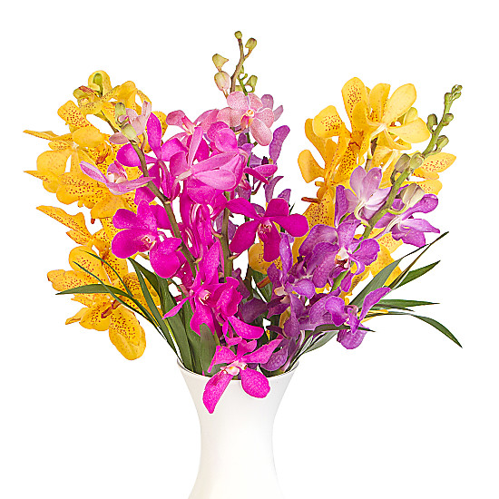 Bright Mokara Orchids