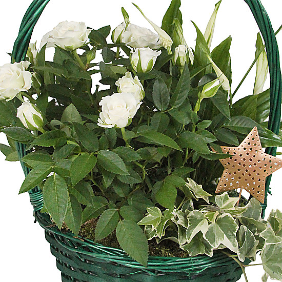 White Xmas Star Basket