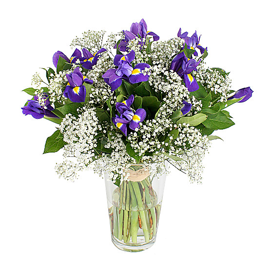 Serenata Flowers Star Sparkle Picture