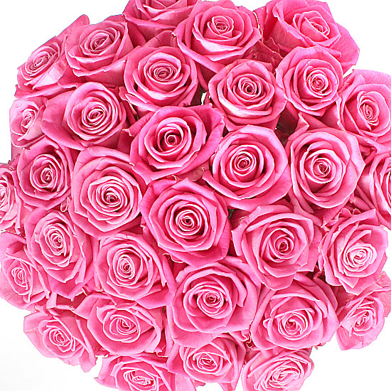 Mass of Pink Roses