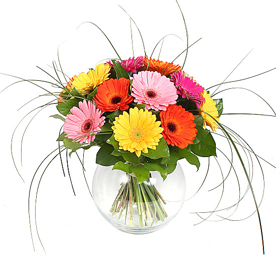 Serenata Flowers Gerbera Bouquet Picture