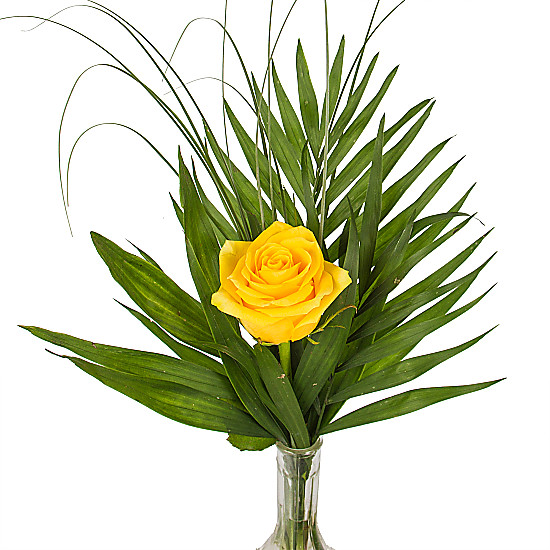 A Yellow Rose in a Vase