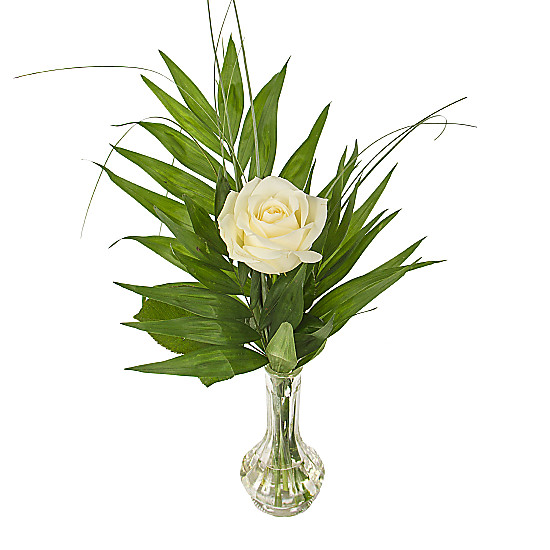 Serenata Flowers A White Rose in a Vase Picture