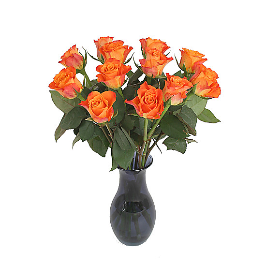 Serenata Flowers A Dozen Orange Roses Giftwrap Picture
