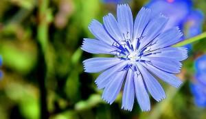 La fleur de blé, du bouquet à la décoration