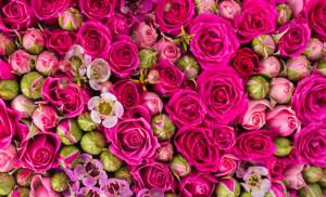 Quelle est ma Fleur de Naissance?