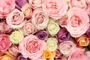 Combien de roses offrir pour un anniversaire