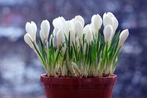 Les plus belles fleurs du mois de février