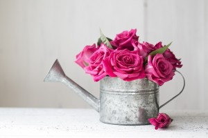 Comment conserver des roses ?