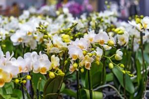 Les fleurs exotiques, comment en prendre soin